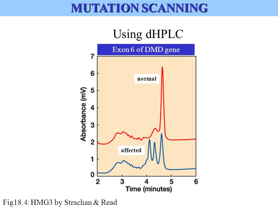 Using dHPLC Exon 6 of DMD gene normal affected Fig18.4: HMG3 by Strachan & Read MUTATION SCANNING