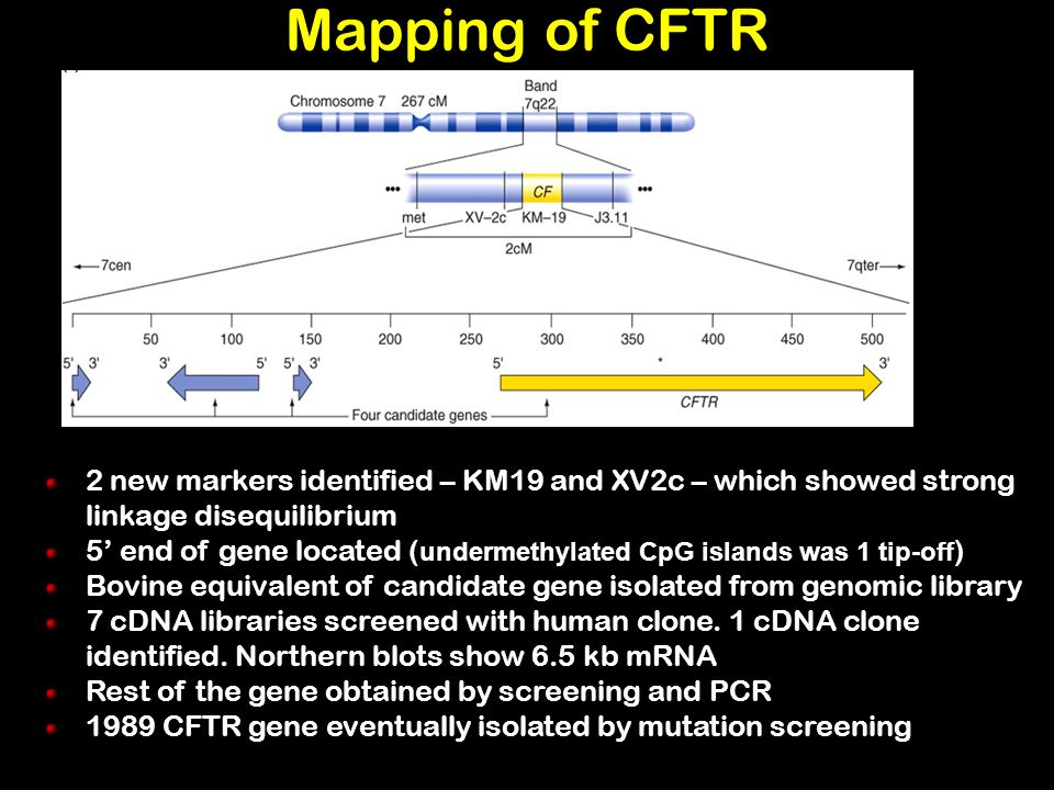 Mapping of CFTR 2 new markers identified – KM19 and XV2c – which showed strong linkage disequilibrium 5 end of gene located ( undermethylated CpG isla