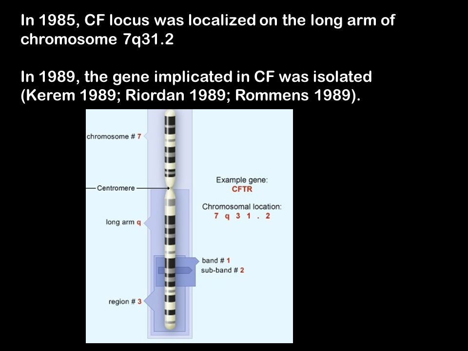 In 1985, CF locus was localized on the long arm of chromosome 7q31.2 In 1989, the gene implicated in CF was isolated (Kerem 1989; Riordan 1989; Rommen