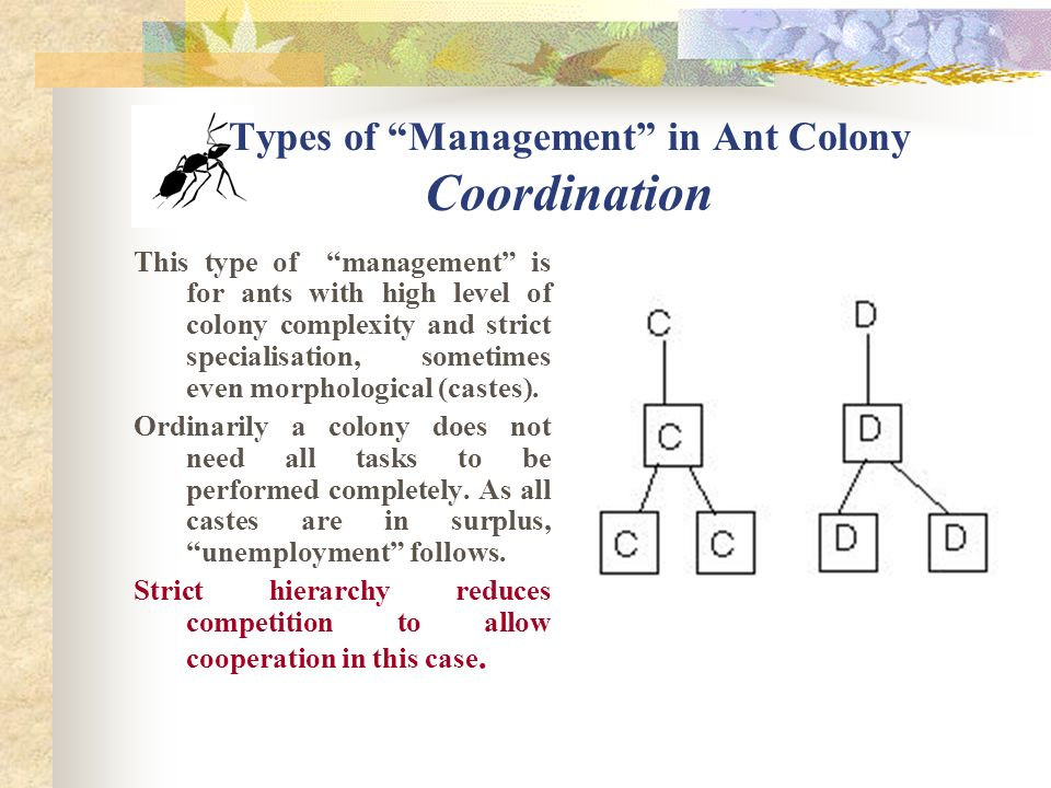 Types of Management in Ant Colony Controlling In the first part in its life an ant does all sorts of different tasks in the nest.