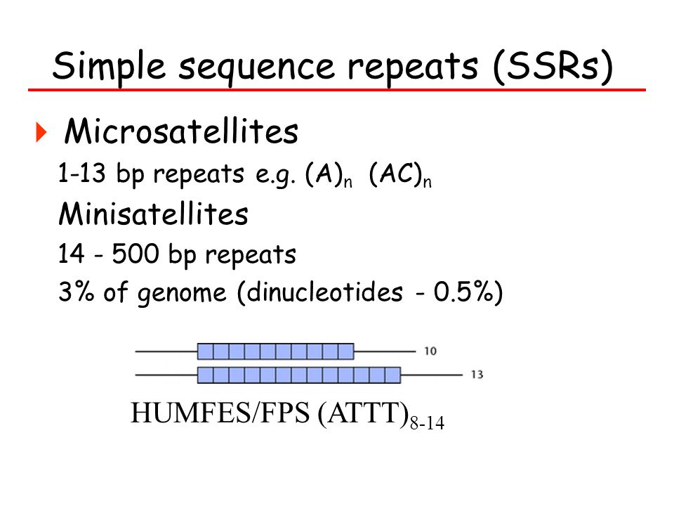 Simple sequence repeats (SSRs) Microsatellites 1-13 bp repeats e.g. (A) n (AC) n Minisatellites 14 - 500 bp repeats 3% of genome (dinucleotides - 0.5%