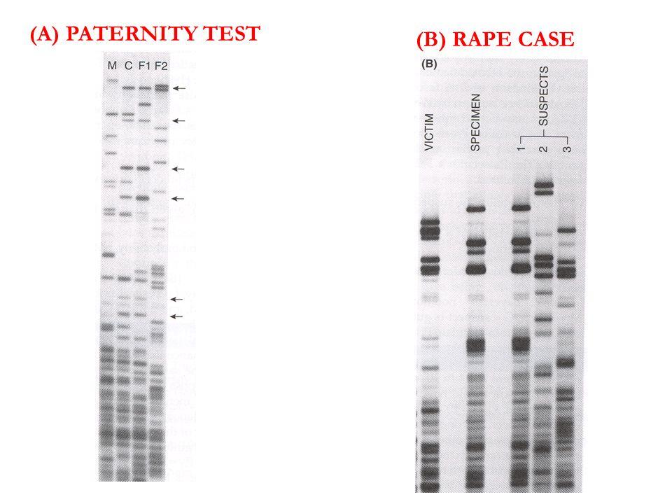 (A) PATERNITY TEST (B) RAPE CASE