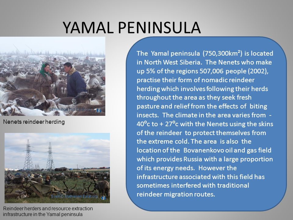 YAMAL PENINSULA The Yamal peninsula (750,300km²) is located in North West Siberia. The Nenets who make up 5% of the regions 507,006 people (2002), pra