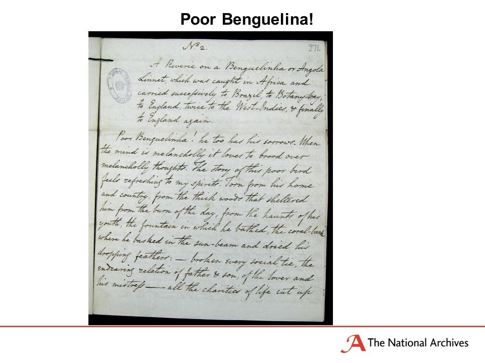 Poor Benguelina!