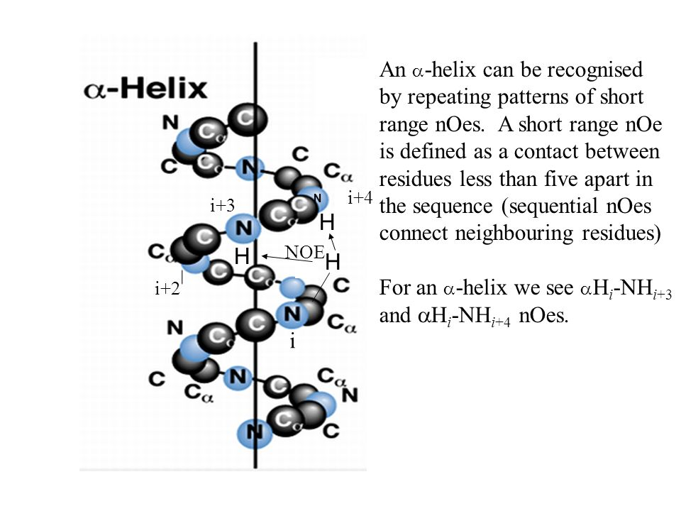 H i i+3 H i+2 NOE H N An -helix can be recognised by repeating patterns of short range nOes.