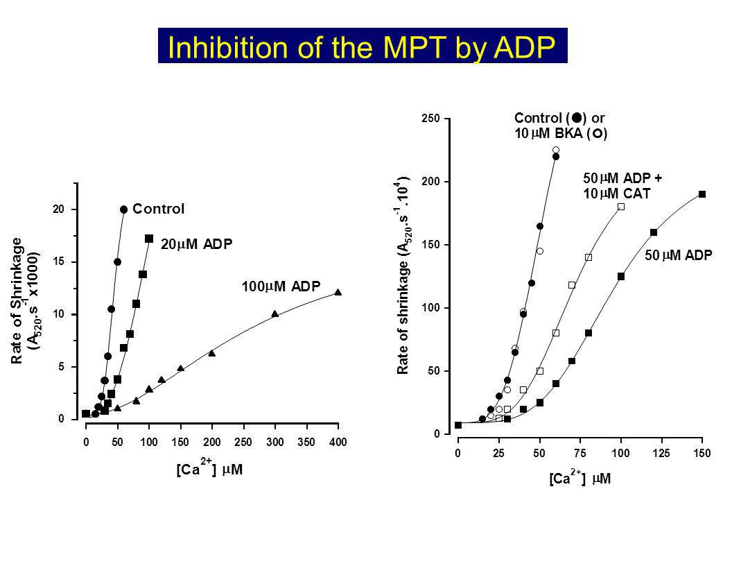 Inhibition of the MPT by ADP 5150 [Ca 2+ ] M 0 50 100 150 200 250 R a t e o f s h r i n k a g e ( A 5 2 0.