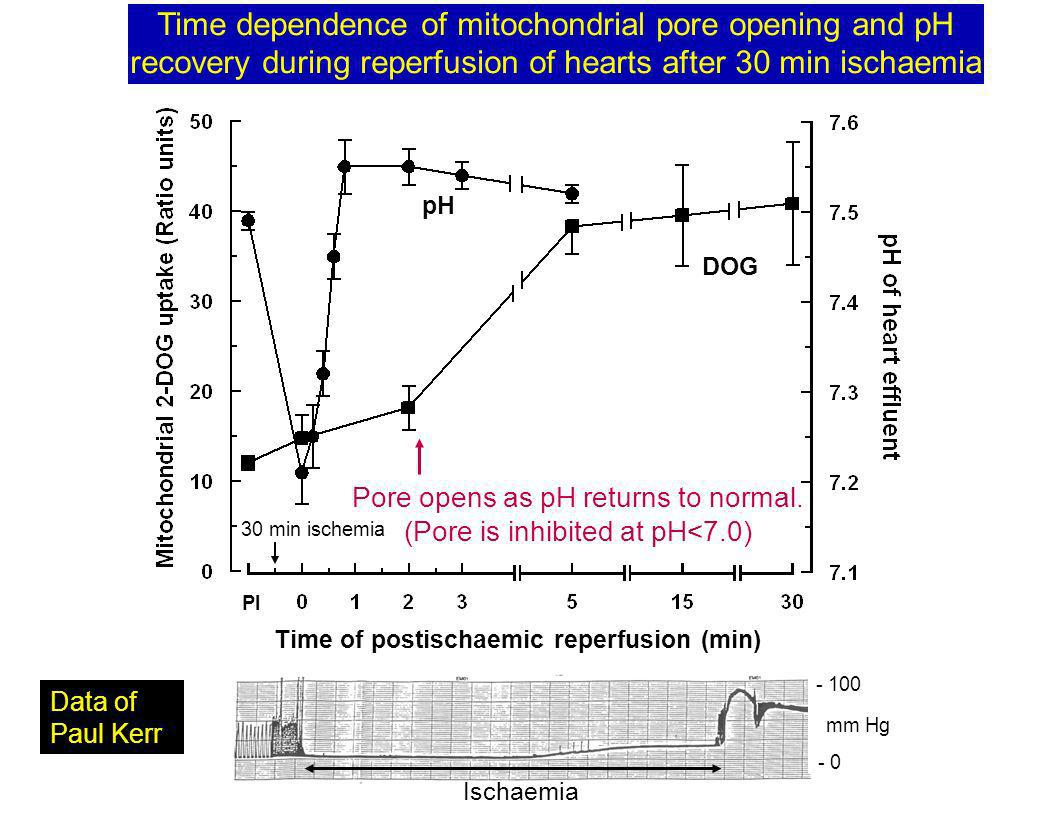 pH DOG 30 min ischemia Time of postischaemic reperfusion (min) PI Time dependence of mitochondrial pore opening and pH recovery during reperfusion of