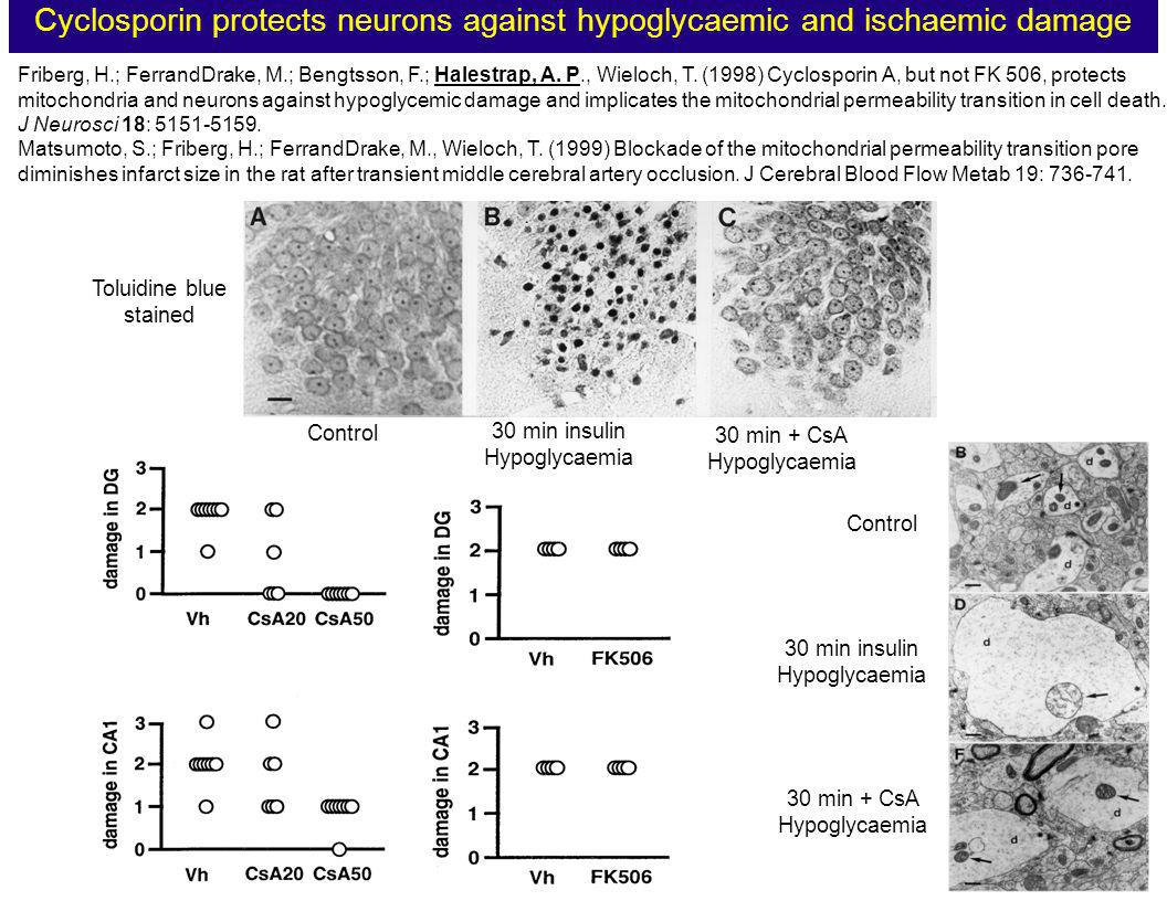 Cyclosporin protects neurons against hypoglycaemic and ischaemic damage Friberg, H.; FerrandDrake, M.; Bengtsson, F.; Halestrap, A. P., Wieloch, T. (1