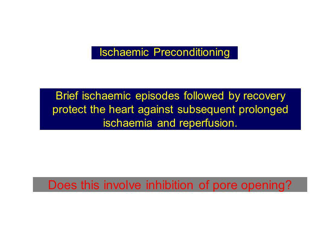 Ischaemic Preconditioning Brief ischaemic episodes followed by recovery protect the heart against subsequent prolonged ischaemia and reperfusion. Does