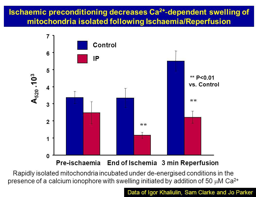0 1 2 3 4 5 6 7 A 520.10 3 Control IP Pre-ischaemia End of Ischemia 3 min Reperfusion ** ** P<0.01 vs. Control Ischaemic preconditioning decreases Ca