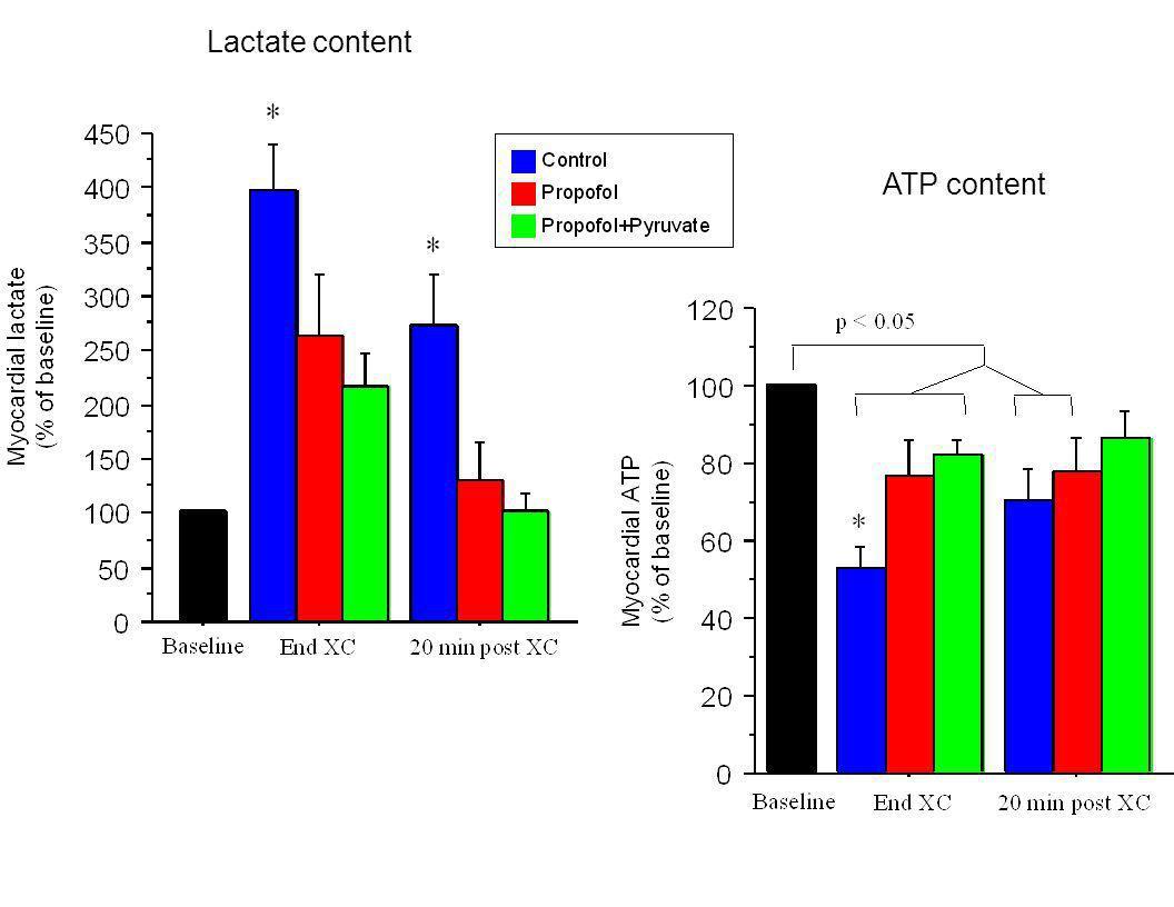 Lactate content ATP content