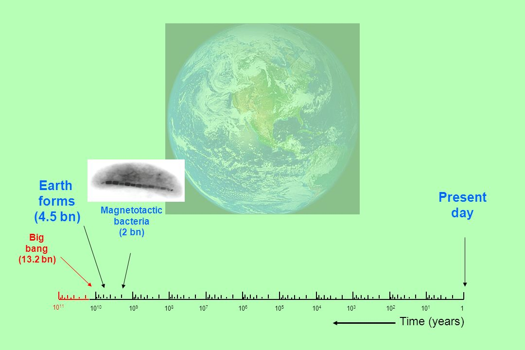 Big bang (13.2 bn) Earth forms (4.5 bn) Present day 10 10 9 10 8 10 7 10 6 10 5 10 4 10 3 10 2 10 1 1 10 11 Magnetotactic bacteria (2 bn) Time (years)