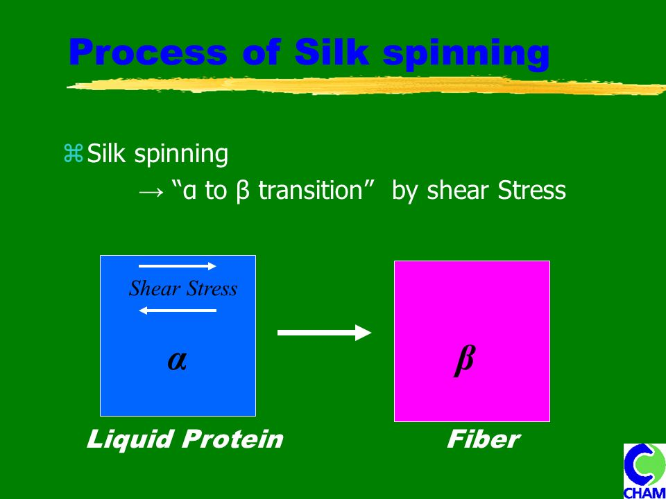 Process of Silk spinning Silk spinning α to β transition by shear Stress β Shear Stress FiberLiquid Protein α