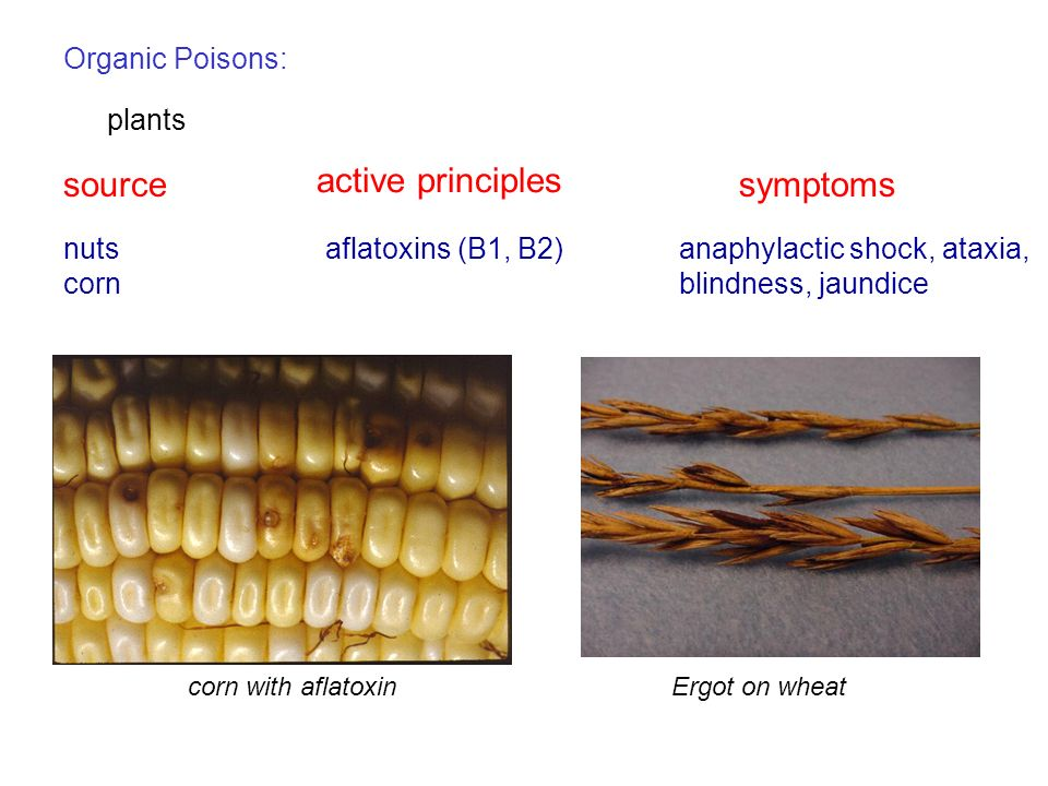 Organic Poisons: plants sourcesymptoms active principles nuts corn aflatoxins (B1, B2)anaphylactic shock, ataxia, blindness, jaundice corn with aflato