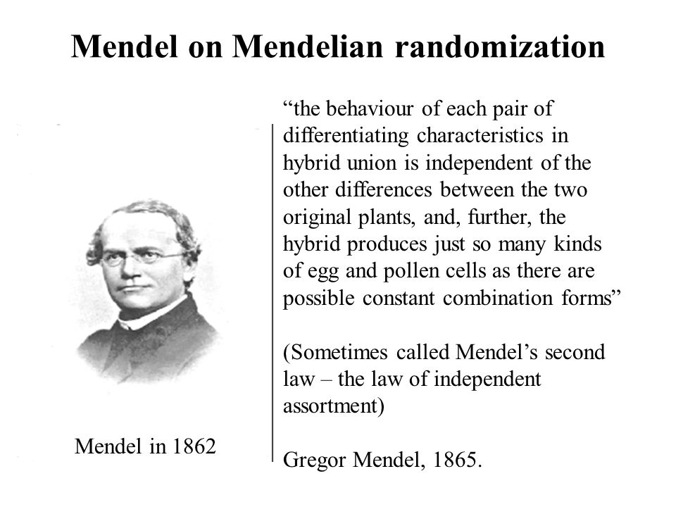 Mendel on Mendelian randomization the behaviour of each pair of differentiating characteristics in hybrid union is independent of the other difference