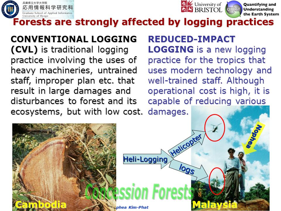 Copy right by the Nophea Kim-Phat Forests are strongly affected by logging practices CONVENTIONAL LOGGING (CVL) is traditional logging practice involving the uses of heavy machineries, untrained staff, improper plan etc.