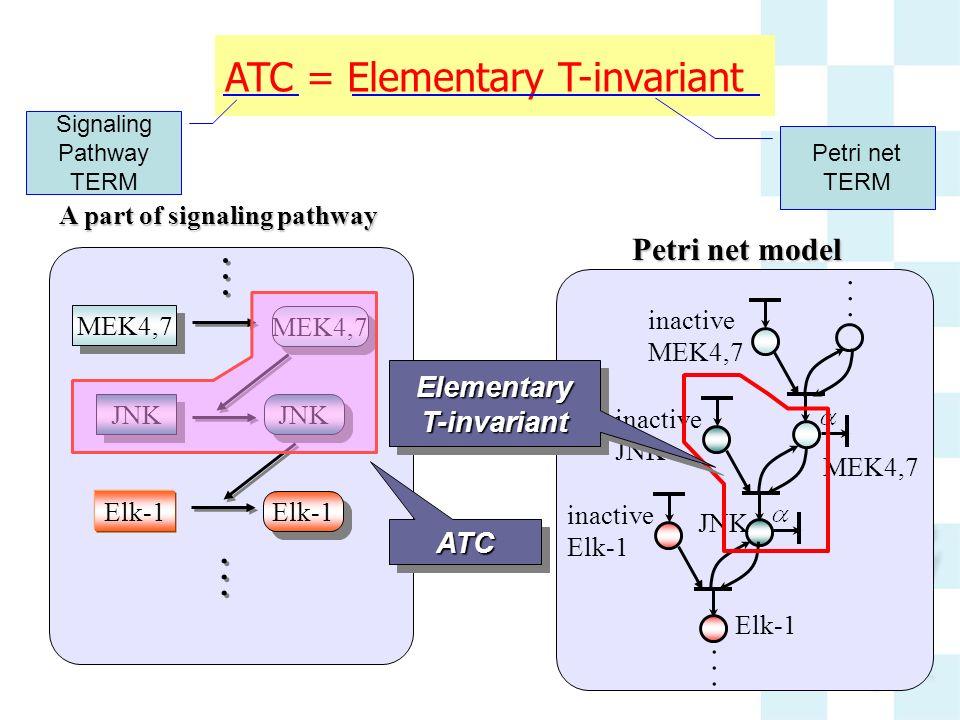 A part of signaling pathway... MEK4,7 JNK MEK4,7... Elk-1 Petri net model inactive JNK MEK4,7... inactive Elk-1 inactive MEK4,7 ATCATC Elementary T-in