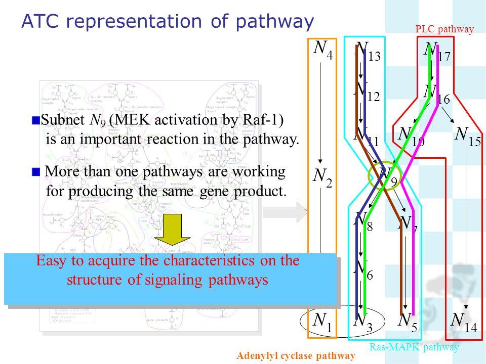 ATC representation of pathway N 1 N 2 N 3 N 4 N 5 N 6 N 7 N 8 N 9 N 10 N 11 N 12 N 13 N 14 N 15 N 16 N 17 Subnet N 9 (MEK activation by Raf-1) is an i
