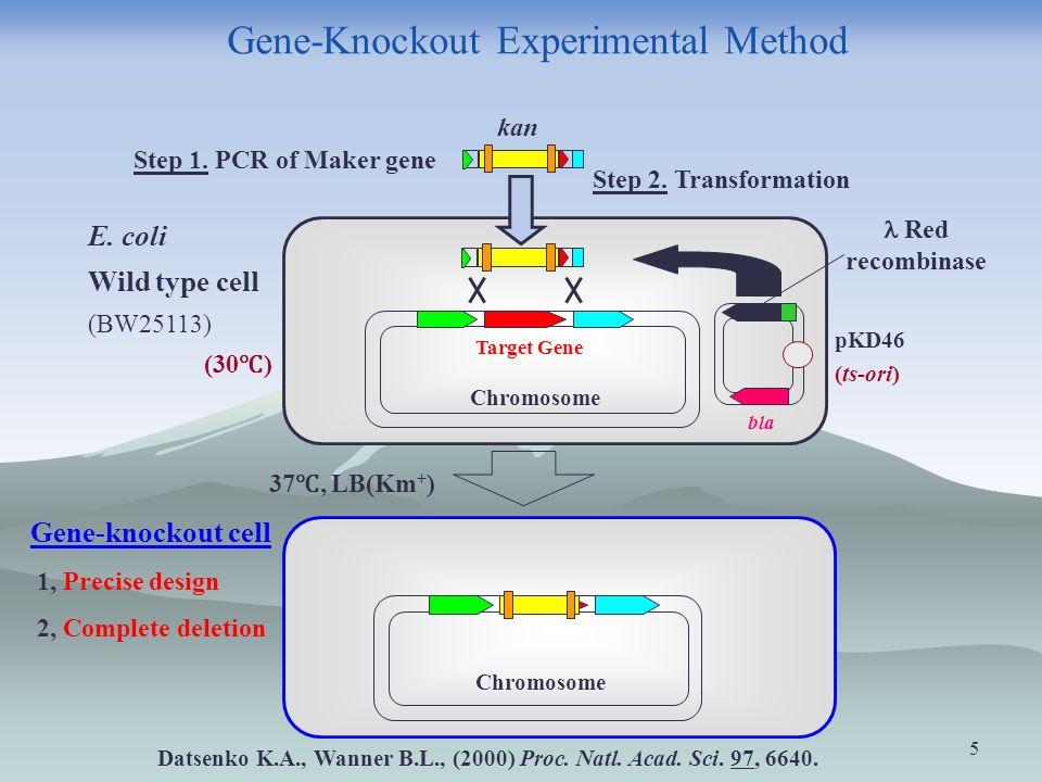 5 Gene-Knockout Experimental Method Red recombinase Chromosome Target Gene Step 2.