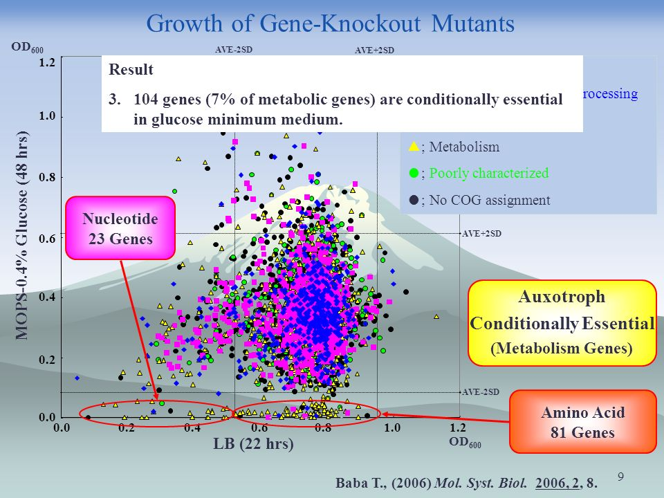 9 Growth of Gene-Knockout Mutants 0.00.20.40.60.81.01.2 LB (22 hrs) OD 600 AVE-2SD 0.0 0.2 0.4 0.6 0.8 1.0 1.2 MOPS-0.4% Glucose (48 hrs) OD 600 AVE+2SD AVE-2SD AVE+2SD COGs category ; Information storage and processing ; Cellular processes ; Metabolism ; Poorly characterized ; No COG assignment Amino Acid 81 Genes Auxotroph Conditionally Essential (Metabolism Genes) Nucleotide 23 Genes Baba T., (2006) Mol.