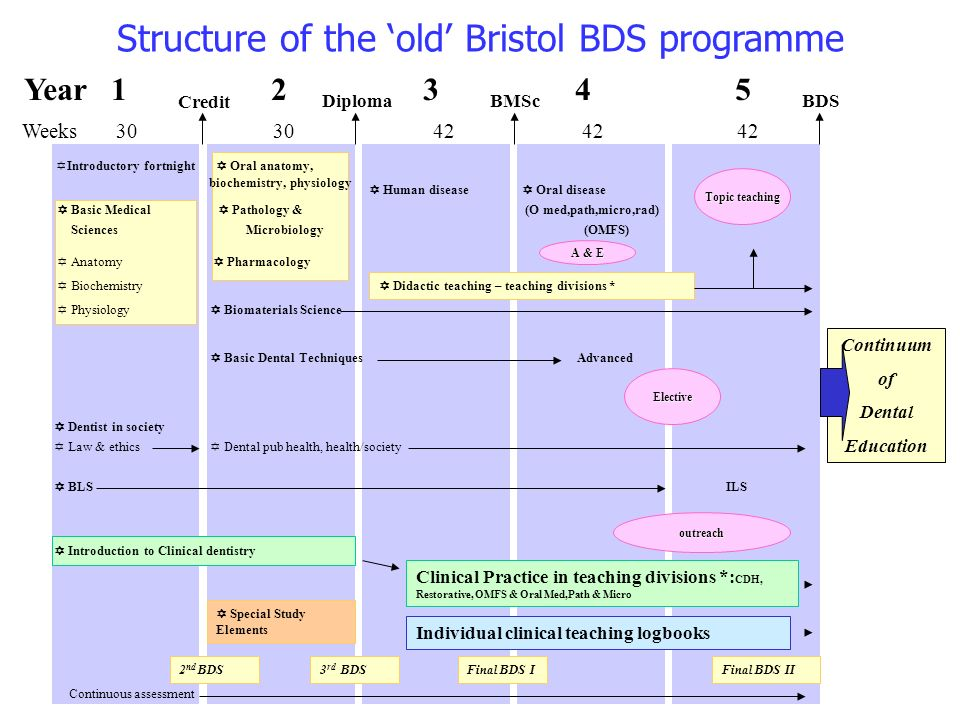 Structure of the old Bristol BDS programme Year Weeks Introductory fortnight Oral anatomy, biochemistry, physiology Human disease Oral disease Basic Medical Pathology & (O med,path,micro,rad) Sciences Microbiology (OMFS) Anatomy Pharmacology Biochemistry Physiology Biomaterials Science Basic Dental Techniques Advanced Elective Dentist in society Law & ethics Dental pub health, health/society BLSILS Introduction to Clinical dentistry Individual clinical teaching logbooks Topic teaching Clinical Practice in teaching divisions *: CDH, Restorative, OMFS & Oral Med,Path & Micro Credit DiplomaBMScBDS Continuum of Dental Education Didactic teaching – teaching divisions * outreach A & E 2 nd BDS3 rd BDSFinal BDS IFinal BDS II Continuous assessment Special Study Elements Elective