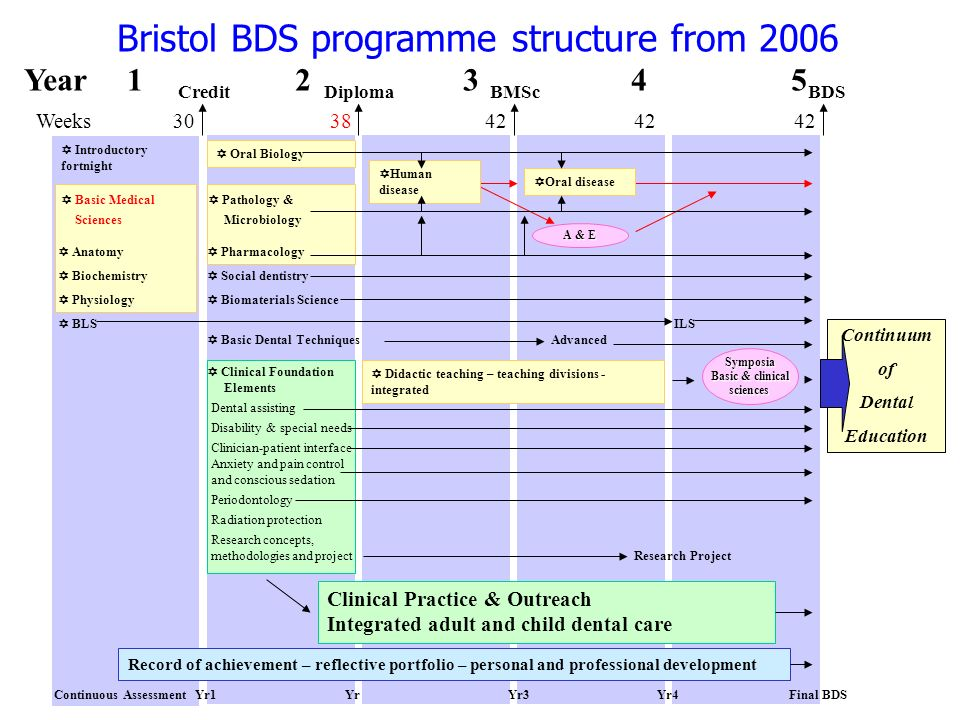 Bristol BDS programme structure from 2006 Year 1 2 3 4 5 Weeks 30 38 42 42 42 Introductory fortnight Basic Medical Pathology & Sciences Microbiology A