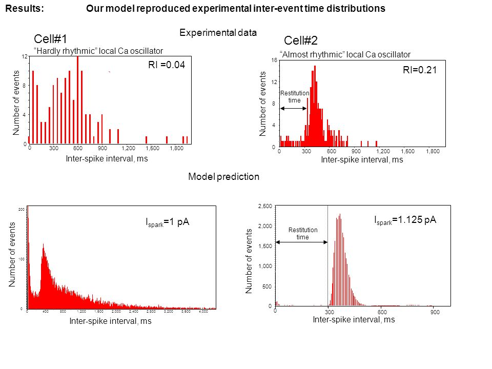 900600300 0 2,500 2,000 1,500 1,000 500 0 Cell#1 Cell#2 Inter-spike interval, ms Number of events Inter-spike interval, ms Number of events Restitution time Results:Our model reproduced experimental inter-event time distributions Hardly rhythmic local Ca oscillator Almost rhythmic local Ca oscillator RI =0.04 RI=0.21 I spark =1 pA I spark =1.125 pA Inter-spike interval, ms Experimental data Model prediction 1,8001,5001,2009006003000 16 12 8 4 0 Number of events 1,8001,5001,200900600300 0 12 8 4 0 Restitution time 4,0003,6003,2002,8002,4002,0001,6001,2008004000 200 100 0 Number of events