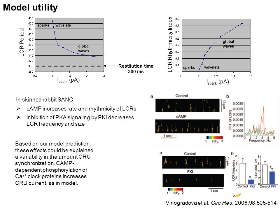 Model utility LCR Period Restitution time 300 ms I spark (pA) sparks global waves wavelets sparks global waves wavelets LCR Rhythmicity Index In skinned rabbit SANC: cAMP increases rate and rhythmicity of LCRs inhibition of PKA signaling by PKI decreases LCR frequency and size Vinogradova et al.