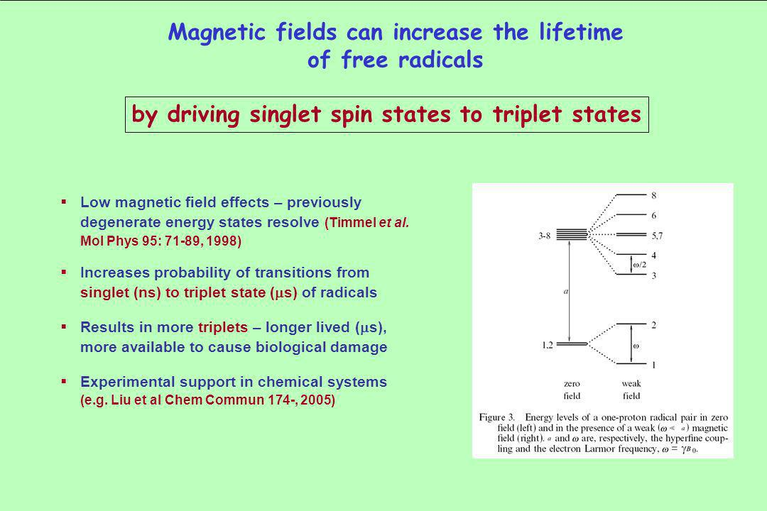 Low magnetic field effects – previously degenerate energy states resolve (Timmel et al.