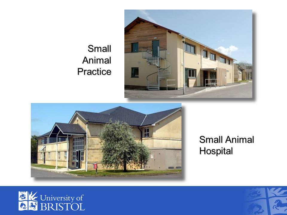 Small Animal Hospital Small Animal Practice