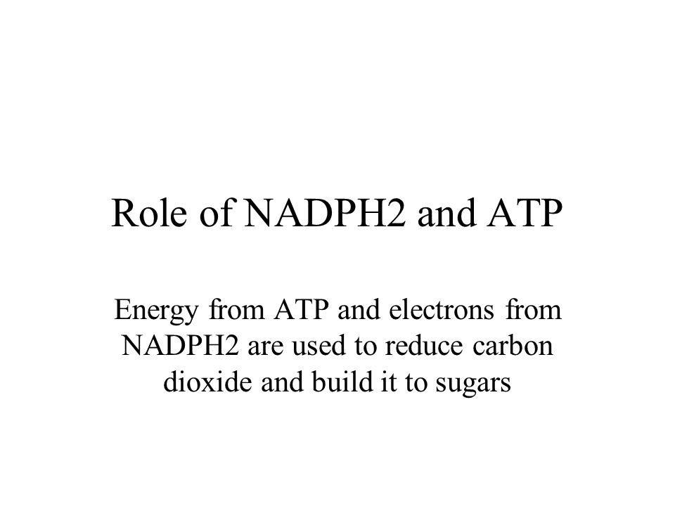 The light independent reactions occur at night for only a few seconds due to limited amounts of ATP and supply of NADPH2.