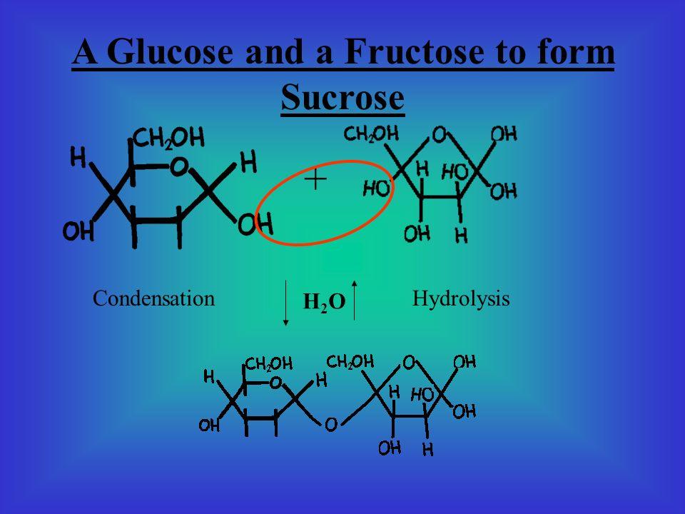 2 Glucose to form Maltose + Condensation Hydrolysis H2OH2O