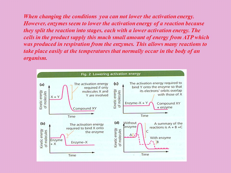 The activation energy of a chemical reaction is actually the energy required to form the transition state, so enzymes lower the activation energy by s