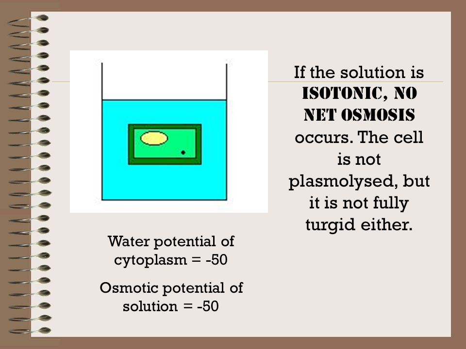 If the solution is hypertonic, net exosmosis occurs and causes plasmolysis (the cell membrane pulls away from the cell wall. The cell wall stays intac