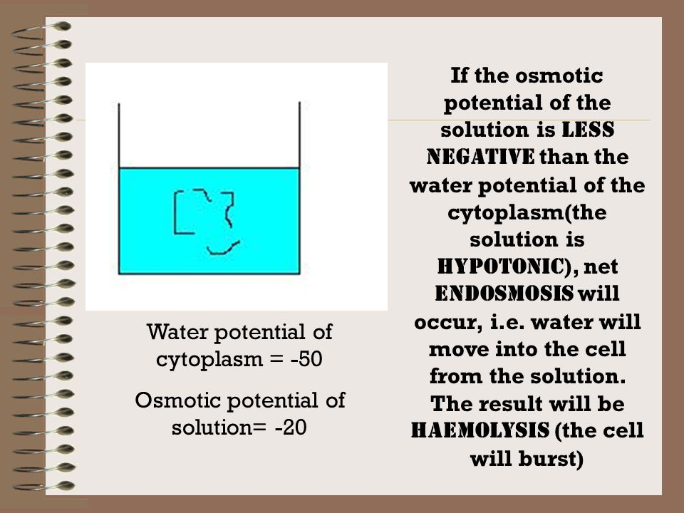 An animal cell with water potential –50 is placed in a solution…