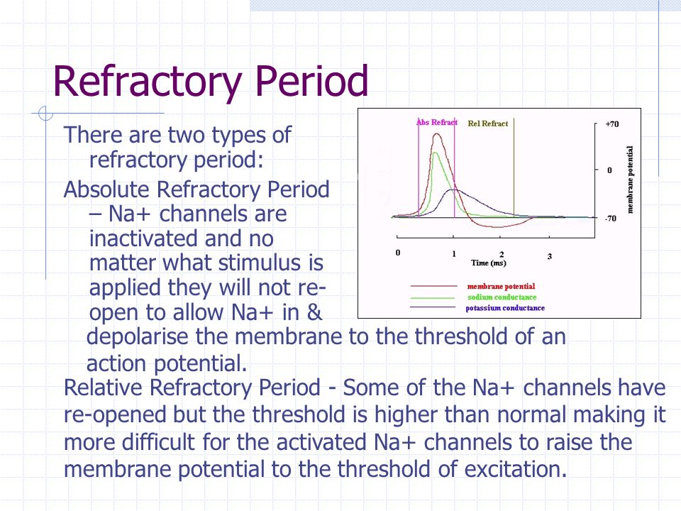 Refractory Period There are two types of refractory period: Absolute Refractory Period – Na+ channels are inactivated and no matter what stimulus is a