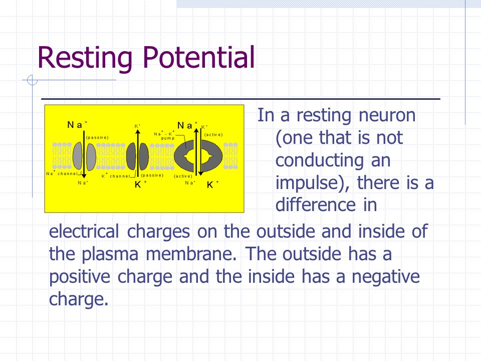 Resting Potential In a resting neuron (one that is not conducting an impulse), there is a difference in electrical charges on the outside and inside o