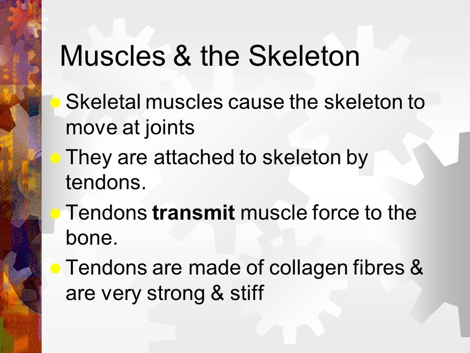 Muscle Is responsible for almost all the movements in animals 3 types