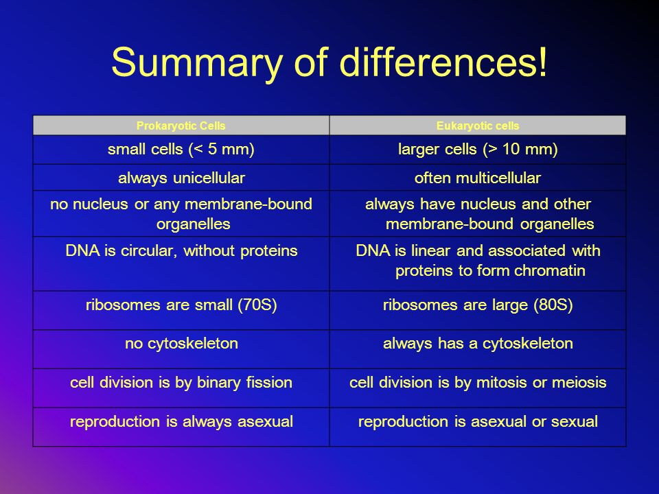 Summary of differences! Prokaryotic CellsEukaryotic cells small cells (< 5 mm)larger cells (> 10 mm) always unicellularoften multicellular no nucleus