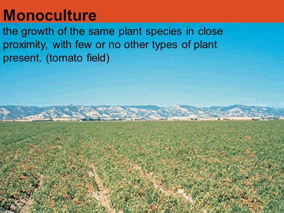 Monoculture the growth of the same plant species in close proximity, with few or no other types of plant present.