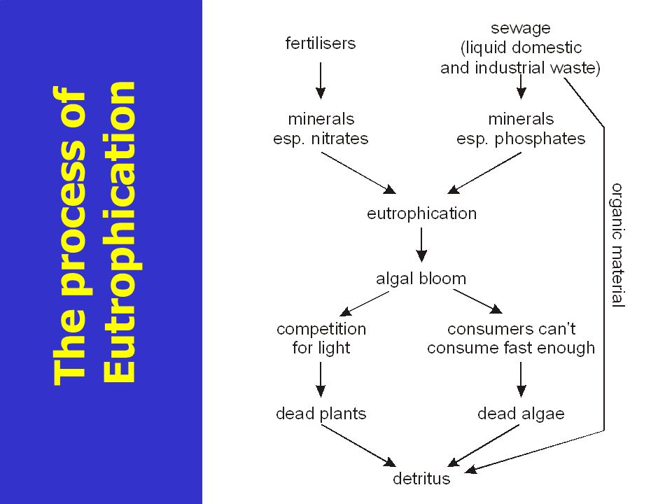 The process of Eutrophication cont.