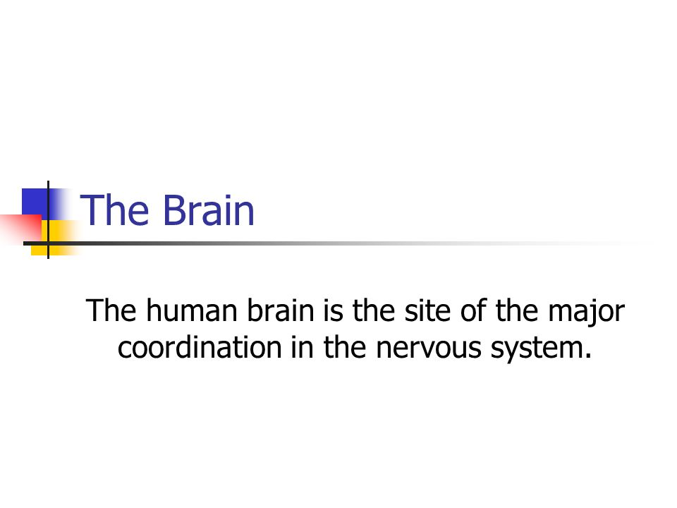 The Brain The human brain is the site of the major coordination in the nervous system.