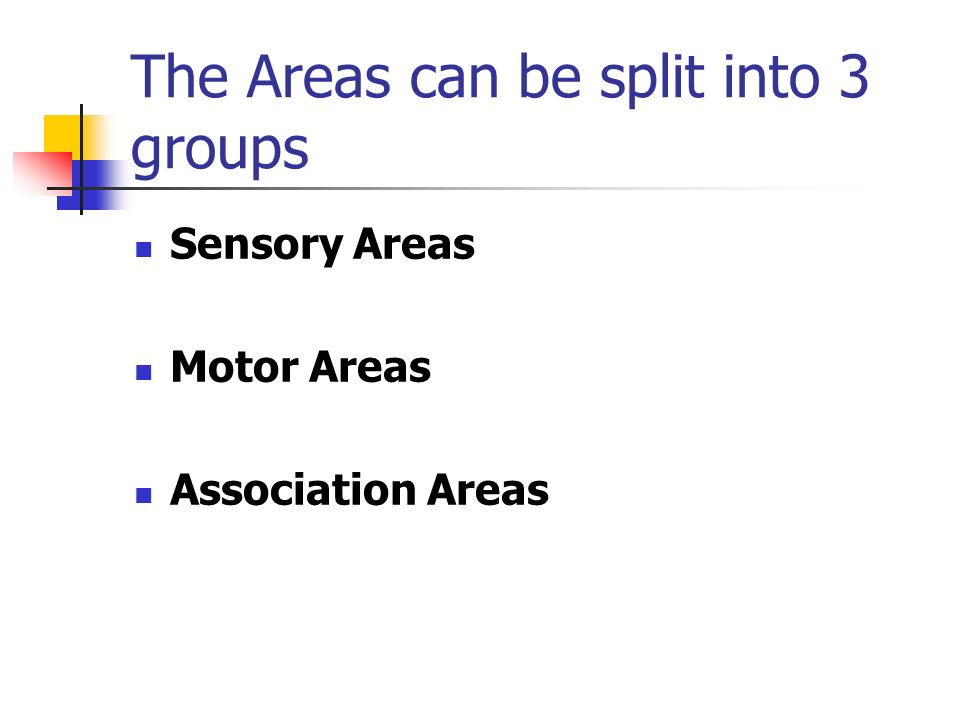The Areas can be split into 3 groups Sensory Areas Motor Areas Association Areas