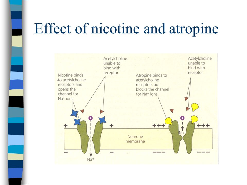 Various effects of drugs on synapses: DRUG ACTIONEFFECT Mimic a neurotransmitterSwitch on a synapse Stimulate the release of a neurotransmitter Switch