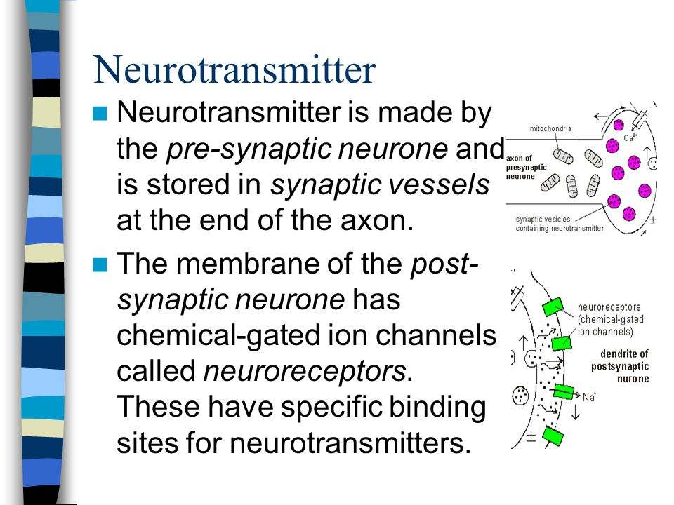 A Synapse Pre-synaptic neurone = neurone sending impulse Post-synaptic neurone = neurone receiving impulse