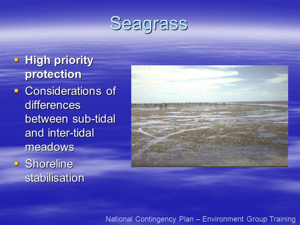 Seagrass High priority protection High priority protection Considerations of differences between sub-tidal and inter-tidal meadows Considerations of differences between sub-tidal and inter-tidal meadows Shoreline stabilisation Shoreline stabilisation National Contingency Plan – Environment Group Training