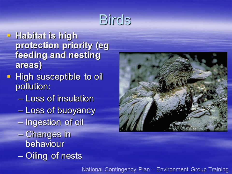 Birds Habitat is high protection priority (eg feeding and nesting areas) Habitat is high protection priority (eg feeding and nesting areas) High susceptible to oil pollution: High susceptible to oil pollution: –Loss of insulation –Loss of buoyancy –Ingestion of oil –Changes in behaviour –Oiling of nests National Contingency Plan – Environment Group Training