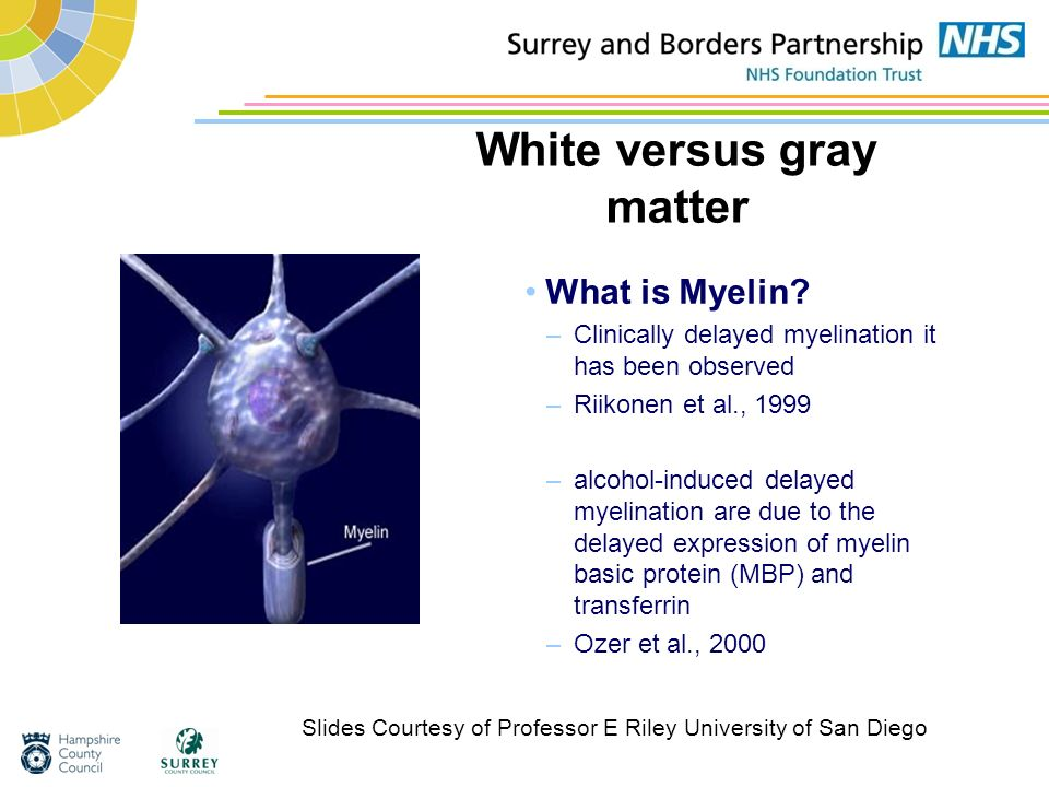 White versus gray matter What is Myelin? –Clinically delayed myelination it has been observed –Riikonen et al., 1999 –alcohol-induced delayed myelinat