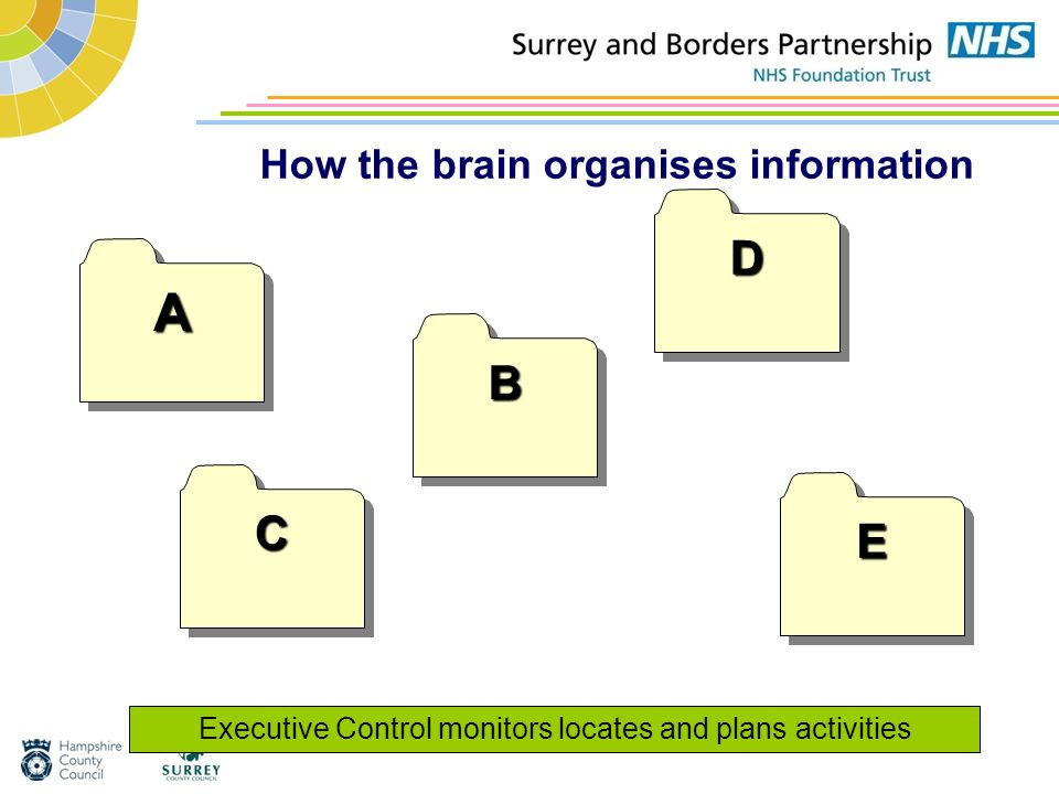 How the brain organises information AA DD BB EE CC Executive Control monitors locates and plans activities