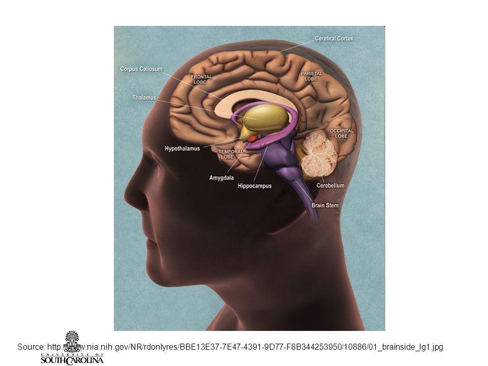 Source: http://www.nia.nih.gov/NR/rdonlyres/BBE13E37-7E47-4391-9D77-F8B344253950/10886/01_brainside_lg1.jpg